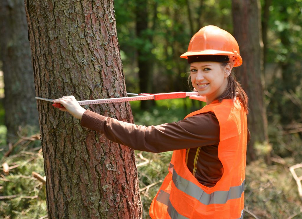 forestry engineer